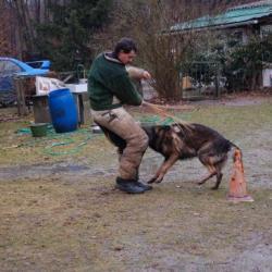Le chien à l'action